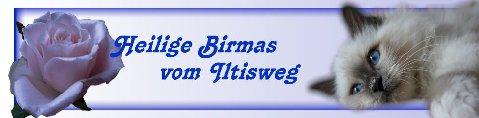 Heilge Birmas vom Iltisweg